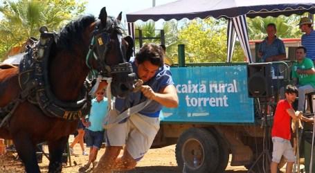 Torrent celebra su XIX Concurso de Tiro y Arrastre