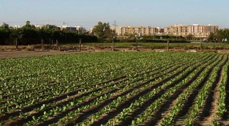 Xirivella presenta al•legacions a dos projectes de la Conselleria per protegir l'horta