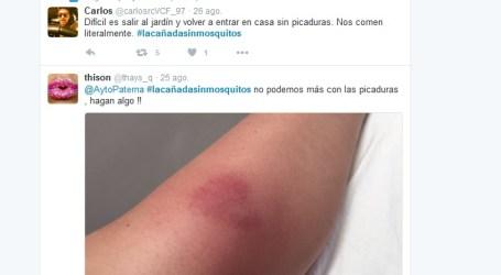 Intensifican los controles contra el mosquito tigre en Paterna