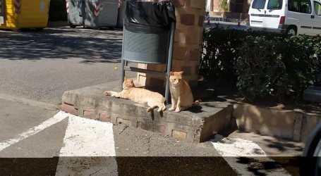 Denuncian una agresión por proteger a varios gatos del ataque de dos perros en Albal