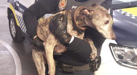 La Policia d'Alaquàs rescata un gos que podria estar sent víctima de maltractament