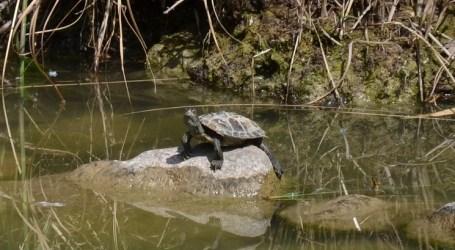 Alertan de presencia de especies exóticas en Parque de Cabecera de València