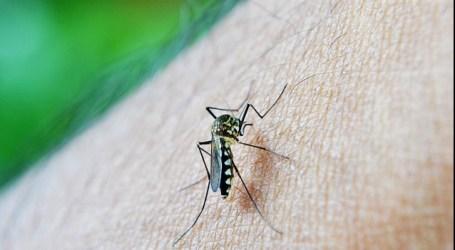 Especialistas del Hospital de Manises recomiendan aplicar frío local y evitar rascar las lesiones del mosquito tigre