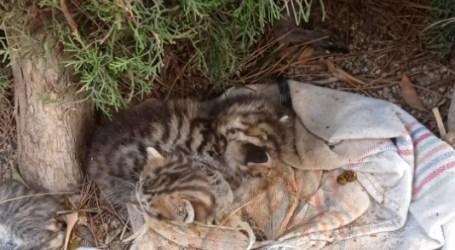 Piden colaboración ciudadana para dar con la persona que ató el hocino a 6 gatos y los abandonó en Torrent
