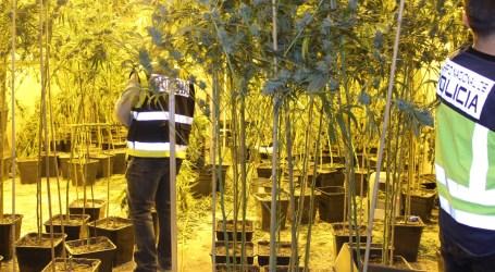 Descubren puntos de cultivo de droga en Torrent, Quart de Poblet, Manises, Xirivella, Paterna, Catarroja y Burjassot