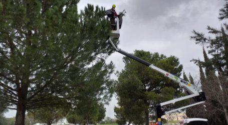 Alaquàs realitza una inspecció exhaustiva dels pins per tal d'evitar problemes