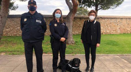 La Policia Local de Manises compta des de fa alguns mesos amb un nou integrant
