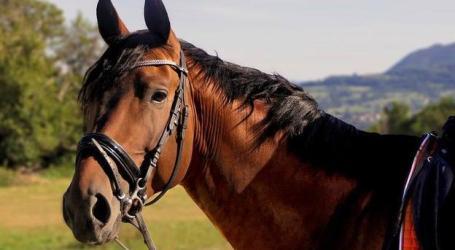 El CICU asiste a una mujer por caerse de un caballo en una escuela ecuestre de Catarroja