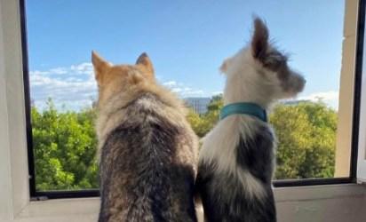 Éxito de la campaña de ADN canino en Quart de Poblet