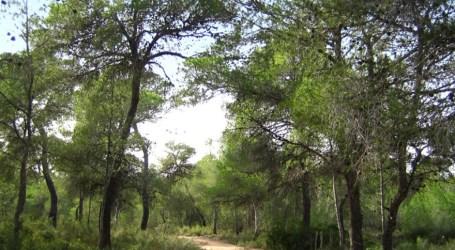 Compromís: «Paterna necessitaria 8.331 arbres més per pal·liar els efectes del canvi climàtic en el municipi»