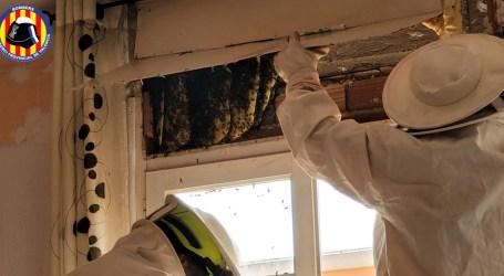 Los bomberos retiran un panal del interior de una vivienda de Xirivella