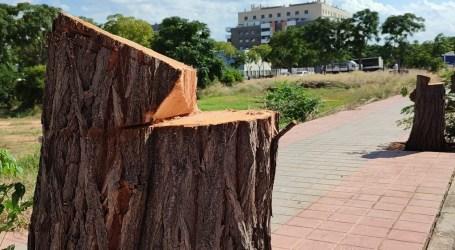 Los árboles talados en Albal serán trasladados al Bosque Mediterráneo y aprovechados como compost