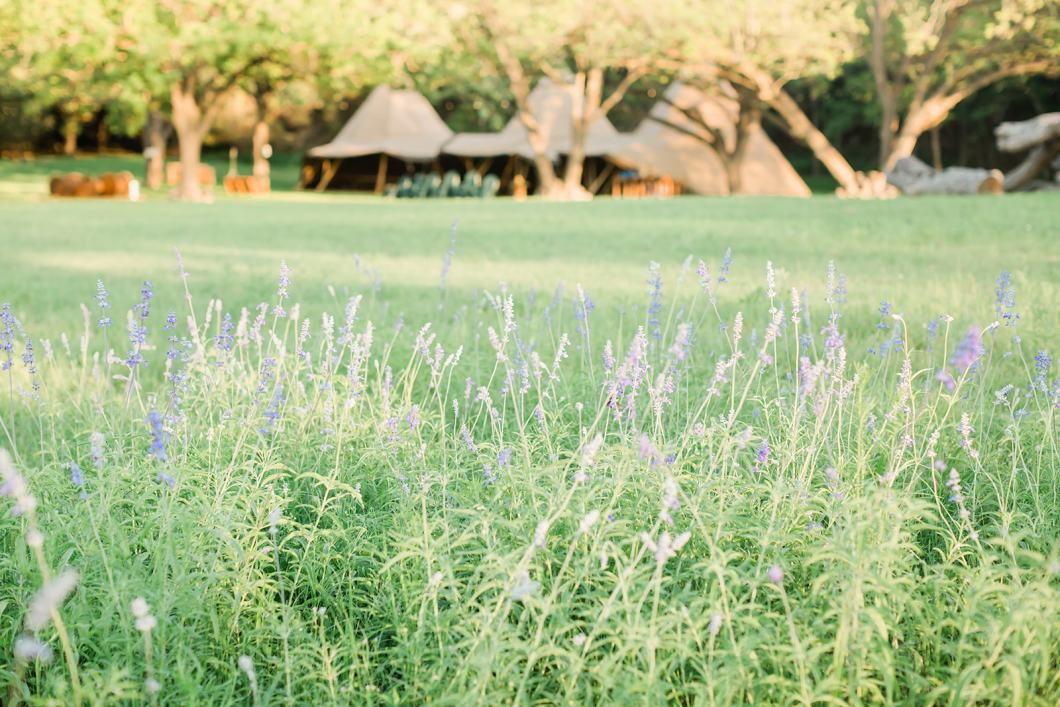 Tipis in a Field Meadow Outdoors