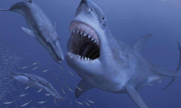 معلومات عامة عن أسماك القرش وأنواعها بالتفصيل