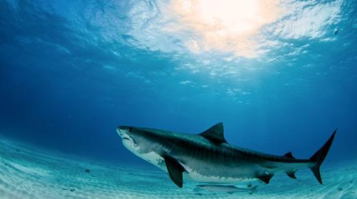 أكبر أنواع الأسماك في العالم