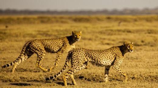 أنواع الحيوانات البرية