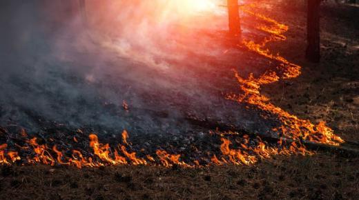 أهم أسباب حرائق الغابات