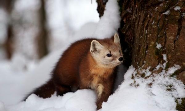 أهم الحيوانات البرية في أوروبا