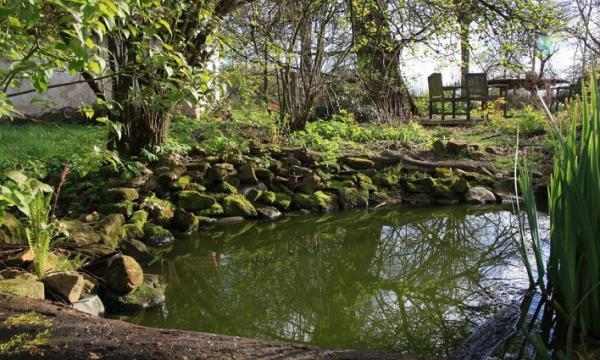 أهم الفروق بين البحيرة والبركة