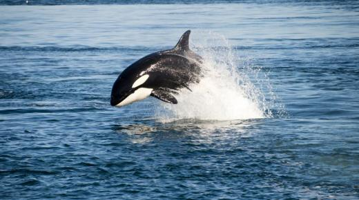 أهم حيوانات المحيط الأطلنطي