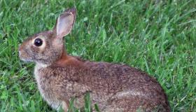الأرانب.. معلومات عن أنواع الأرانب وأين تعيش وطرق تربيتها