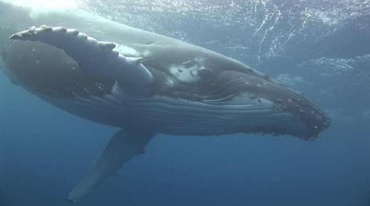 تفسير حلم رؤية الحوت في المنام