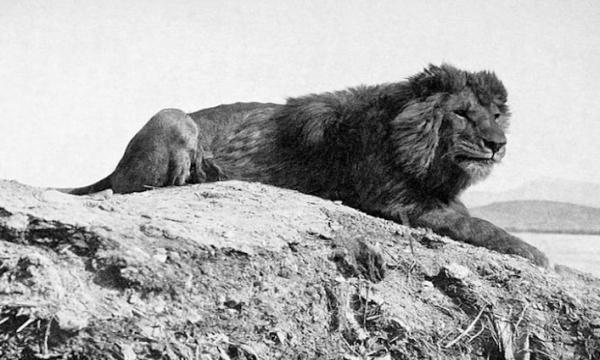 أهم الحيوانات المنقرضة في القرن العشرين