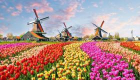 تفسير حلم رؤية الزهور في المنام