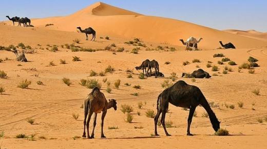 تفسير حلم رؤية الصحراء في المنام