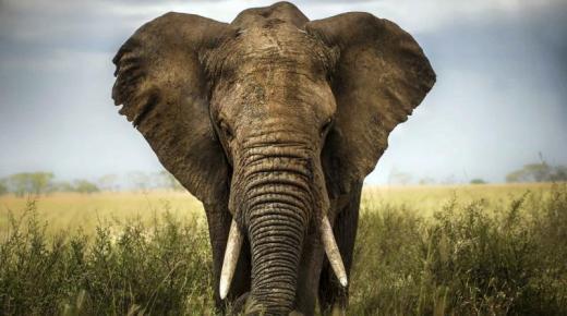 تفسير حلم رؤية الفيل فى المنام