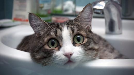 تفسير حلم رؤية القطة فى المنام