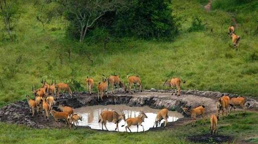 السياحة فى أوغندا