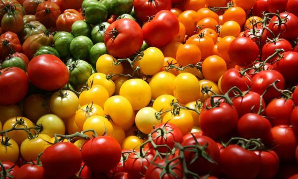 اليوم العالمي للأغذية والاحتفال به