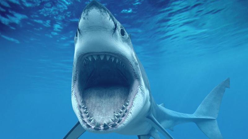 تفسير حلم رؤية سمك القرش في المنام موقع المصطبه