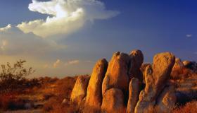 بم تشتهر صحراء موهافي ؟