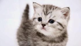 أجمل صور قطط 2020 HD صور وخلفيات أحلى قطط في العالم كيوت وجميلة جداً