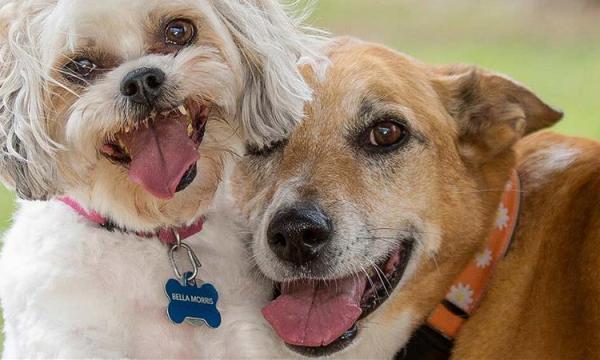 أجمل صور كلاب 2020 HD بطاقات وخلفيات وصور أحلى الكلاب في العالم