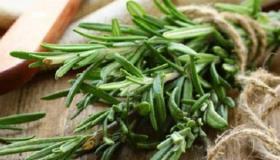 علاج الاكتئاب بالأعشاب الطبية والنباتات