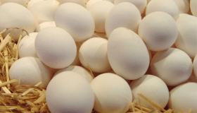 مشروع تجارة البيض البلدي