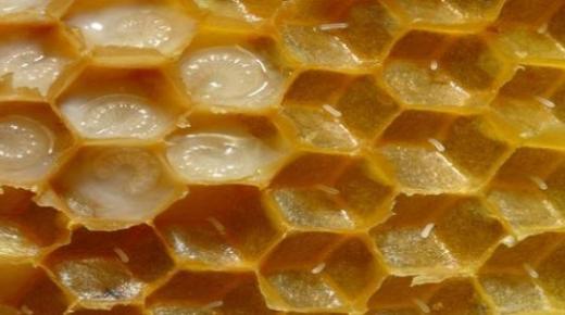 فوائد غذاء ملكة النحل