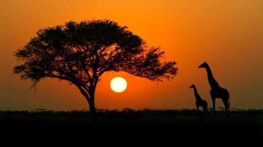 ما هى دول قارة أفريقيا؟