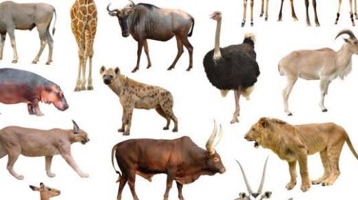 أنواع الثدييات