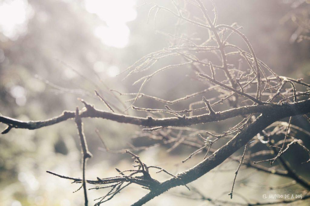 Feldberg rama. Selva negra en tres dias