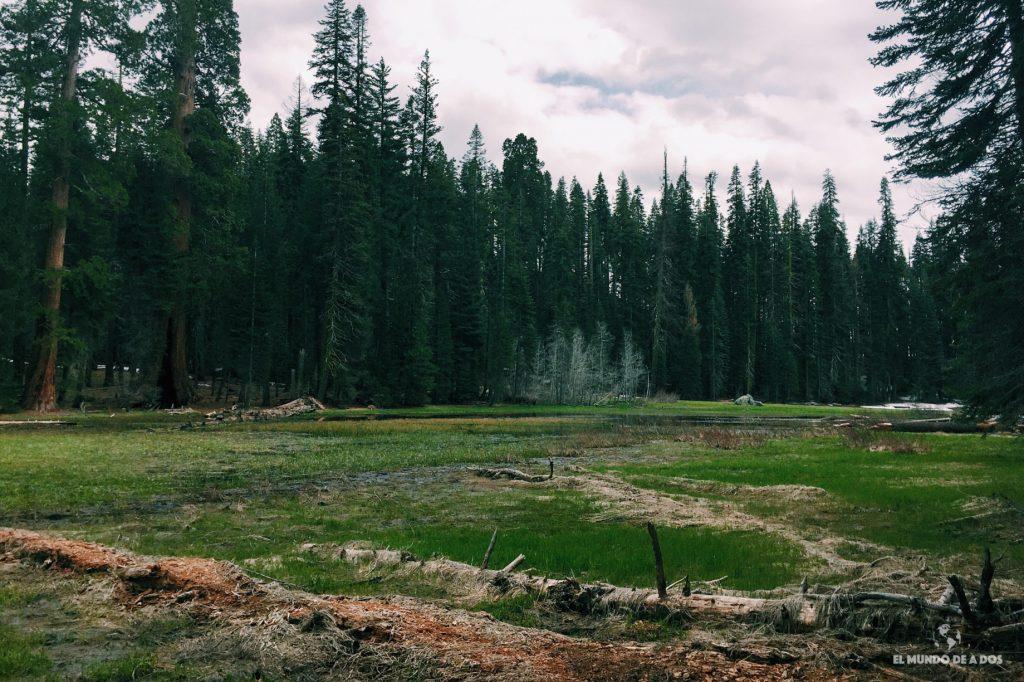 Crescent Meadow. Parque Nacional de las Secuoyas