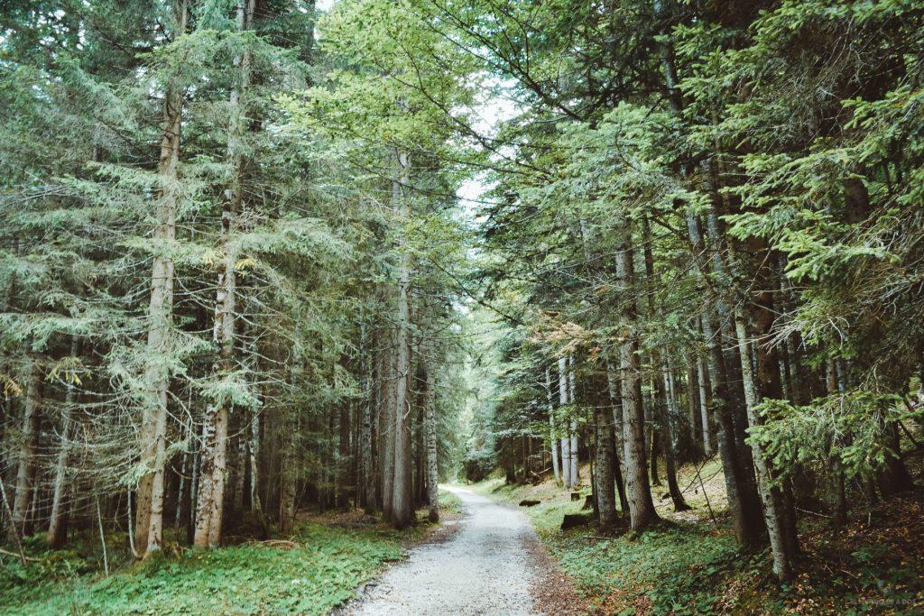 Camino por el bosque hasta el Lago Sorapis