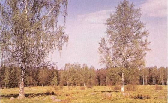 Plantas de la comunidad forestal nórdica