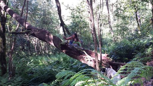 Garajonay: Senderismo en el Bosque de Los Cedros