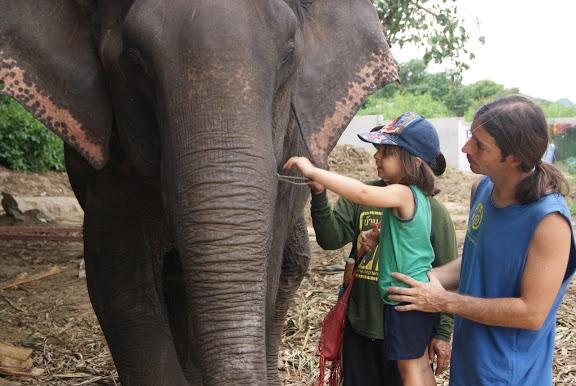 razones-para-viajar-a-tailandia - Visitar Elephants World en Kanchanaburi