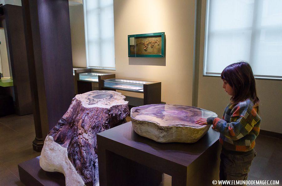Que ver en bruselas en dos días - Museo de las Ciencias Naturales