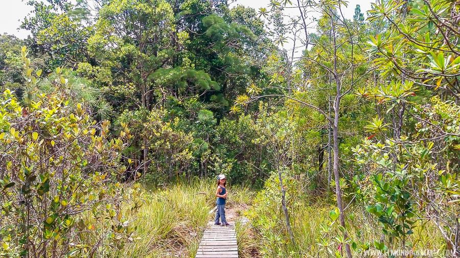 Parque Nacional de Bako - pasarelas